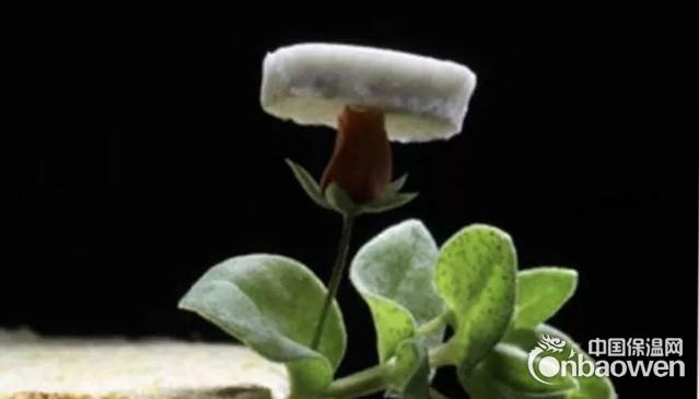 超輕納米銀絲氣凝膠有望推動能源和電子行業發展