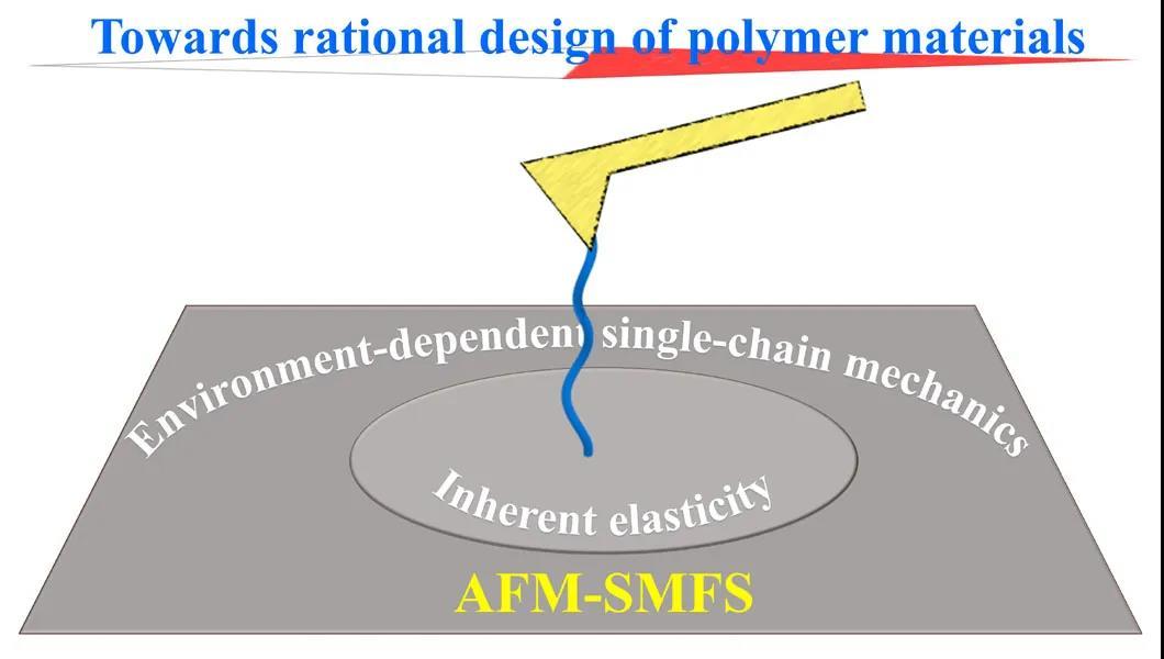 崔树勋教授利用单分子力谱研究高分子单链弹性的环境响应