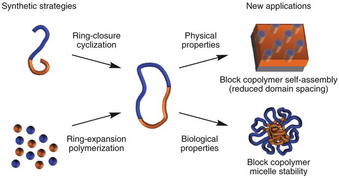 由大肠杆菌环状DNA到环状高分子!环状聚合物的合成、性能及应用前景