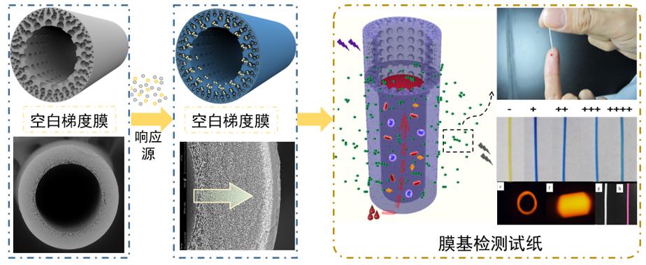 浙江大学黄小军团队在PVDF油水分离膜、梯度膜生物检测传感领域取得系列进展