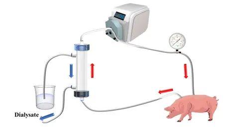刘富团队:在自抗凝透析器领域取得系列进展