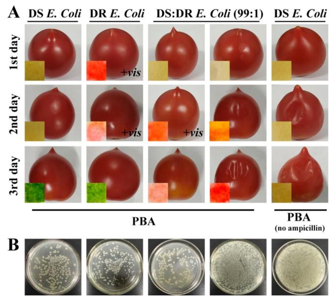 新型比色创可贴:细菌感染一贴就好!