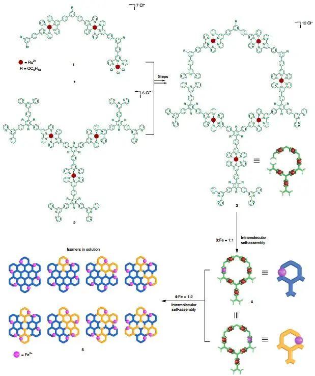 首次制备直径为20 nm的六角形网格超分子